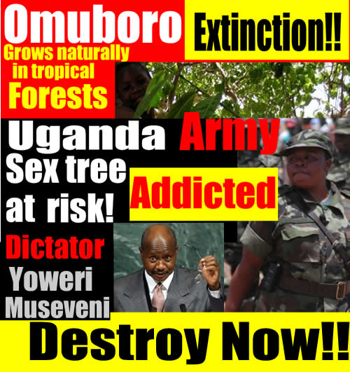 Yoweri Museveni's Environment Policy-is to destroy  Mabira Forest  by  planting there sugar canes, so he  can export more Uganda Waragi-liquor